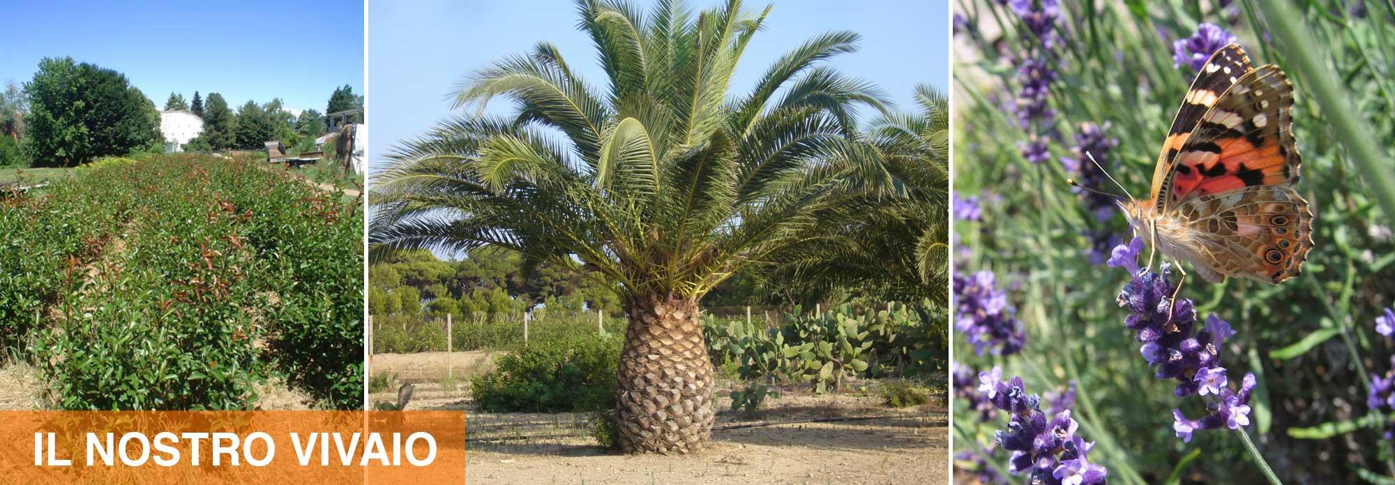 Vendita di piante arbusti fiori stagionali e legna da for Vendita piante e fiori da giardino